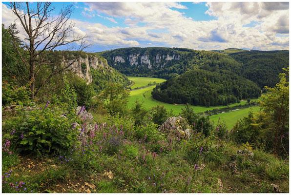 Blick vom Mühlefelsen in das Donautal 7976