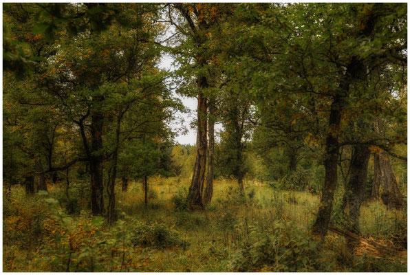 Landschaft im Irndorfer Hardt 8574