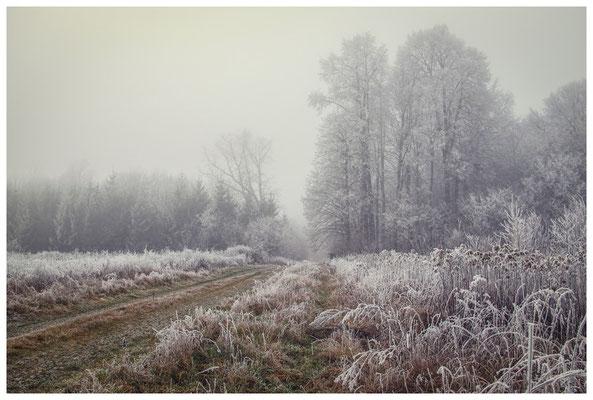 2097 Winterlandschaft in der Nähe vom NSG Heudorfer Ried