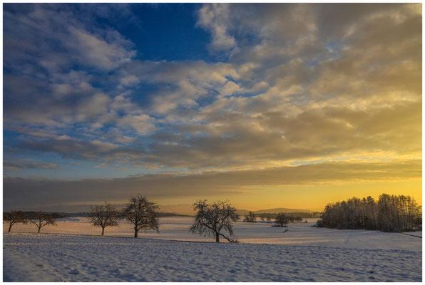 Landschaft bei Münchhöf mit Obstbäumen 5457
