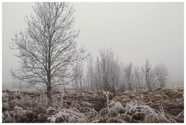 2086 Winterstimmung bei Münchhöf - Eigeltingen