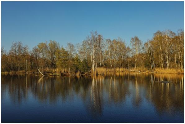 Uferlandschaft Moorteich im Pfrunger-Burgweiler Ried 6676
