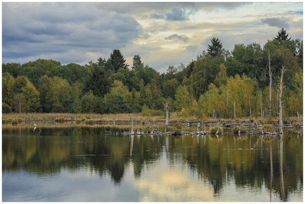 Uferlandschaft Schwenninger Moos mit Silberreiher - links im Bild ;-)