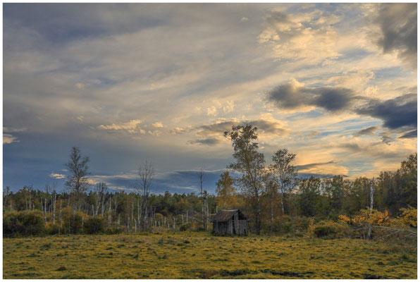 Landschaft im Pfrunger-Burgweiler Ried mit ehemaliger Torfhütte 4497