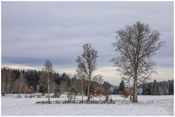 Landschaft im Irndorfer Hardt 5388