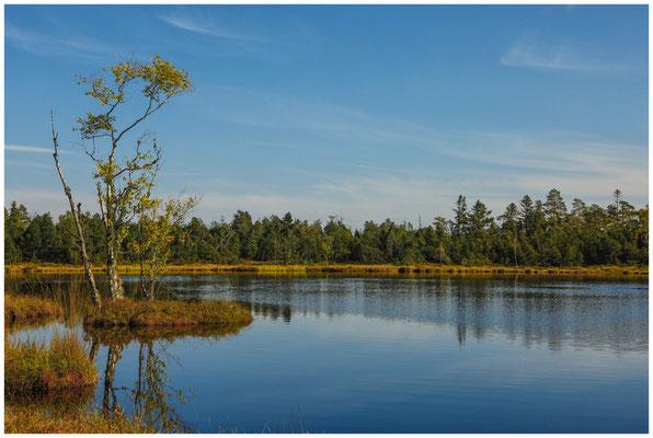 Uferlandschaft Wildsee 4309