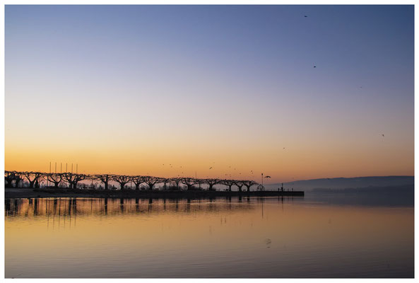 Morgendämmerung an der Radolfzeller Mole - mit Blick auf die Halbinsel Höri 2651