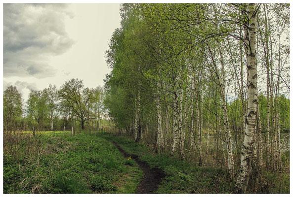 """Wanderweg """"Großer Trauben"""" - rechts der Vogelsee 3630"""