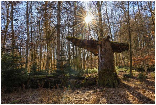Bäume im Unterhölzer Wald 6280