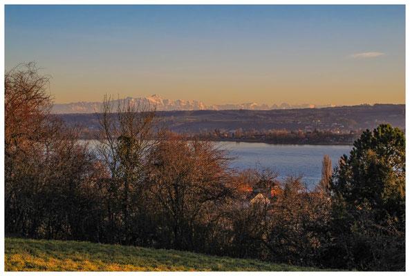 Blick über den Gnadensee zur Insel Reichenau und der Alpenkette mit Säntis 2974