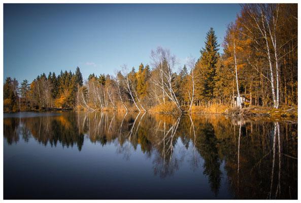 Uferlandschaft Moorsee im Pfrunger-Burgweiler Ried 7209