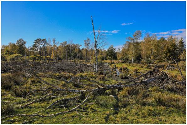 Landschaft mit Totholz im Pfrunger-Burgweiler Ried 4428