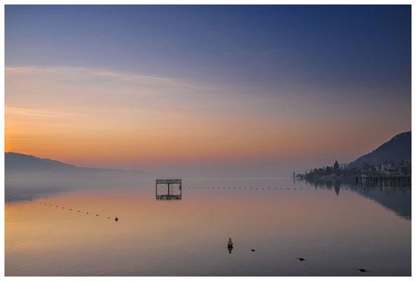 Überlinger See mit Bodman in der Morgendämmerung 3057