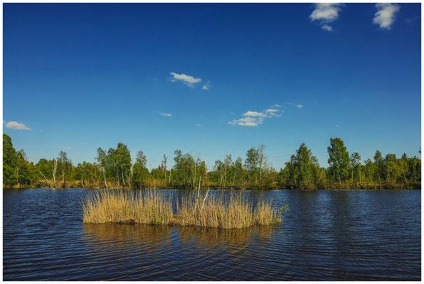 Uferlandschaft Moorteich 7419