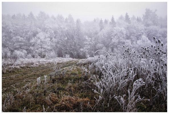 2103 Winterlandschaft in der Nähe vom NSG Heudorfer Ried