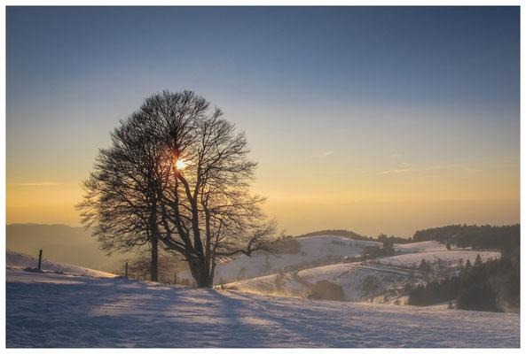 Blick vom Schauinsland 7818