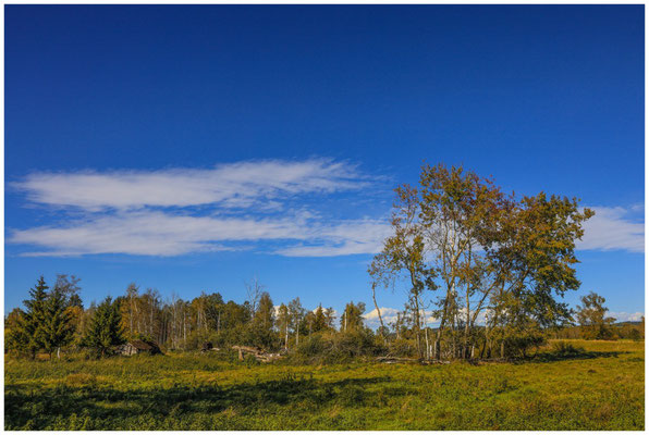 Landschaft im Pfrunger-Burgweiler Ried mit ehemaliger Torfhütte 4415