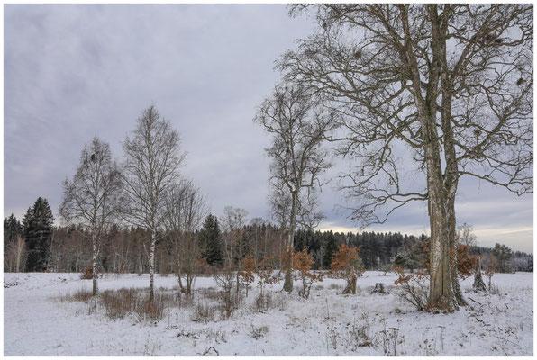 Landschaft im Irndorfer Hardt 5397