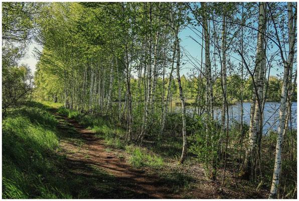 Wanderweg am Großen Vogelsee 7440