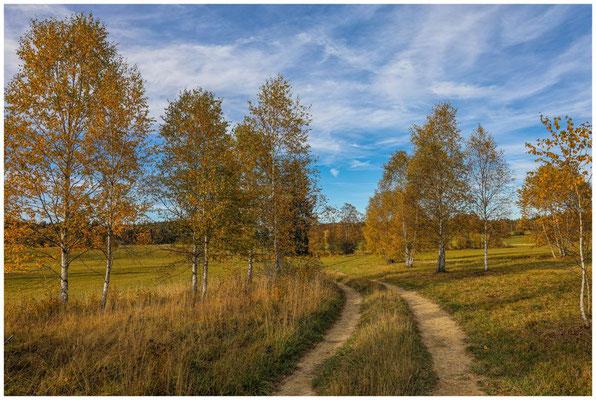 Landschaft im NSG Irndorfer Hardt 1349