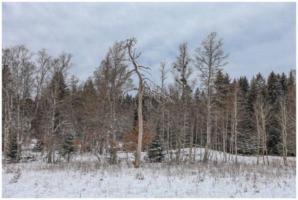 Landschaft im Irndorfer Hardt 5385
