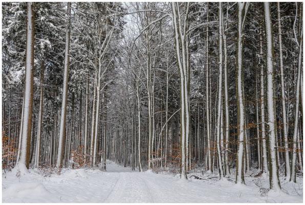 Waldweg mit verschneiten Bäumen 5684