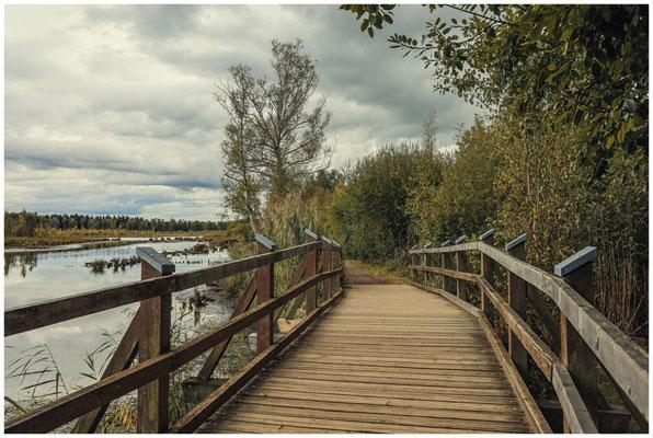 Holzbrücke im Schwenninger Moos 4186
