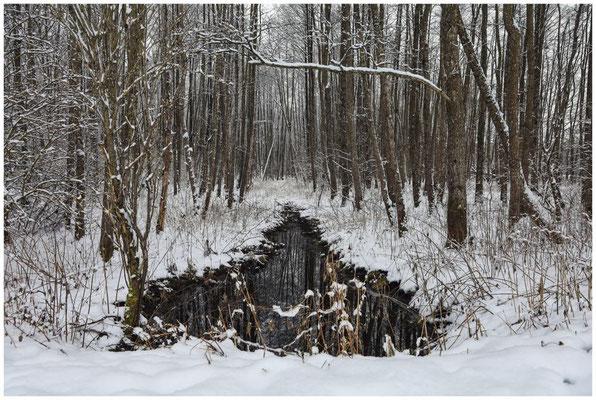 Wassergraben im NSG Heudorfer Ried 5418