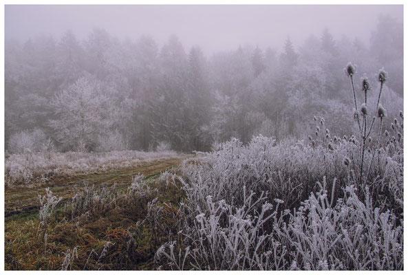 2107 Winterlandschaft in der Nähe vom NSG Heudorfer Ried
