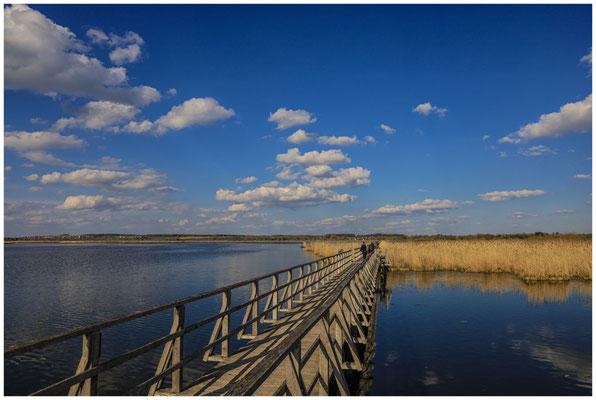 Uferlandschaft Federsee mit Steg 6966