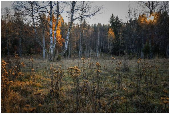 Landschaft im Irndorfer Hardt 4578