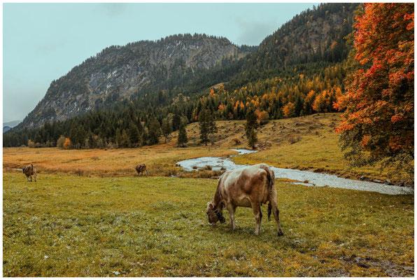 Landschaft im Tannheimer Tal 0981