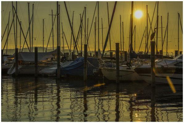 Morgenstimmung im Jachhafen der Insel Reichenau mit Fischreiher 0797
