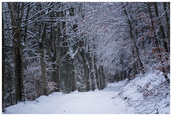 2281 Winterwald