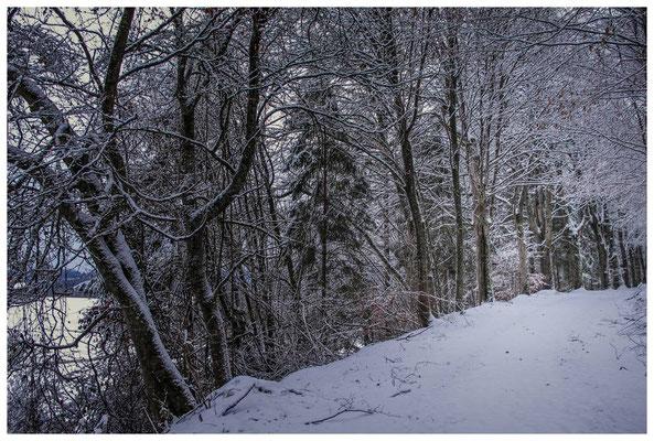 2280 Winterwald