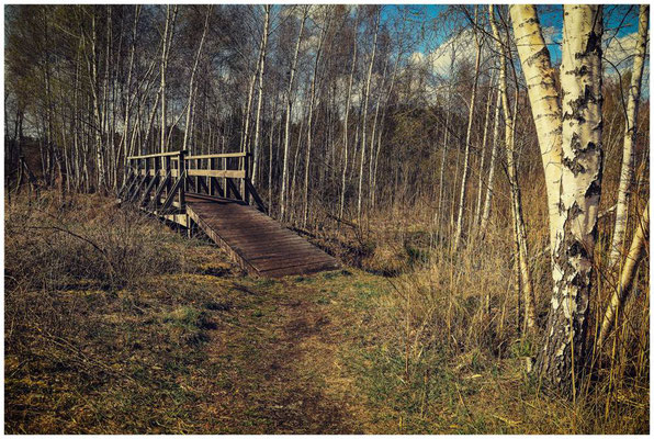 Holzbrücke im Pfrunger-Burgweiler Ried 2126