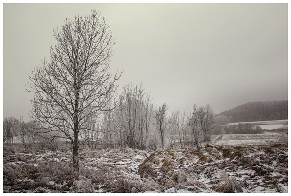 Winterlandschaft mit Raureif bei Münchhöf - Eigeltingen 2565