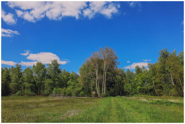 Frühlingslandschaft im Pfrunger-Burgweiler Ried 7350