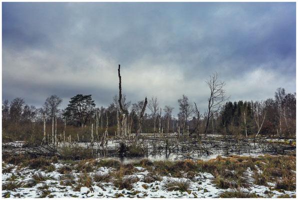 Totholz im Pfrunger-Burgweiler Ried 5235