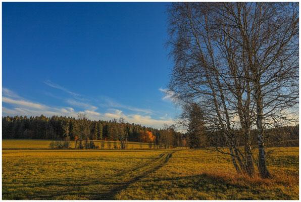Landschaft im Irndorfer Hardt 4602