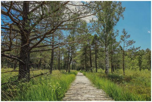 Bohlenwege führen durch das Wurzacher Ried 3222