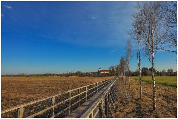 Riedlandschaft mit Federseesteg - Blick auf Bad Buchau 7037