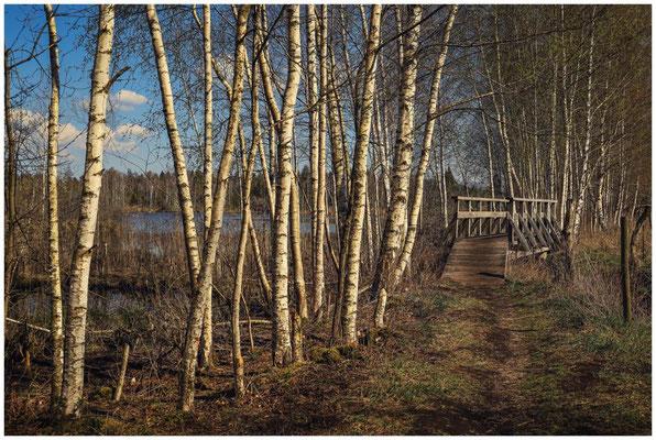 Holzbrücke im Pfrunger-Burgweiler Ried - links der Große Vogelsee 2130