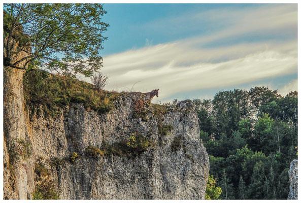 Bergziege - nein, wohl eher Esel auf Felsen 4304
