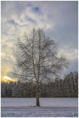 Winterlandschaft mit Birke 5430