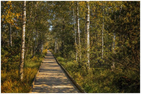 Auf Bohlenwegen durch das Naturschutzgebiet 4335