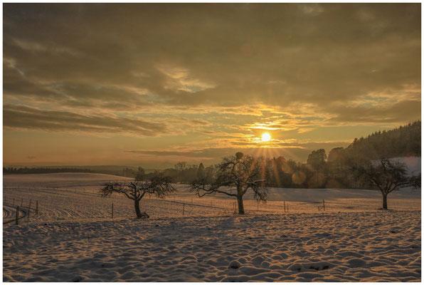 Landschaft bei Münchhöf mit Obstbäumen im Gegenlicht 5460
