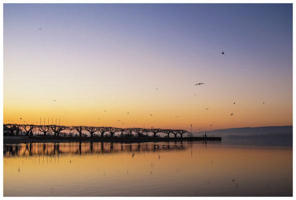 Morgendämmerung an der Radolfzeller Mole - mit Blick auf die Halbinsel Höri 2656