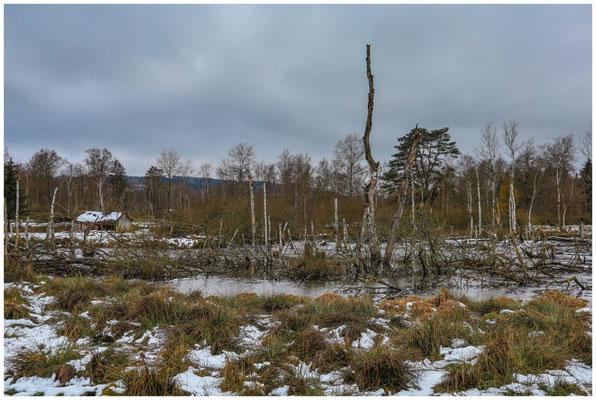 Moorteich mit Totholz und ehemaliger Torfhütte 5240