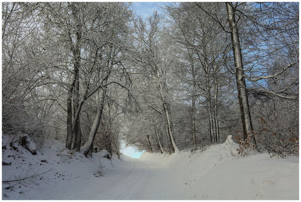 Verschneite Bäume 5676